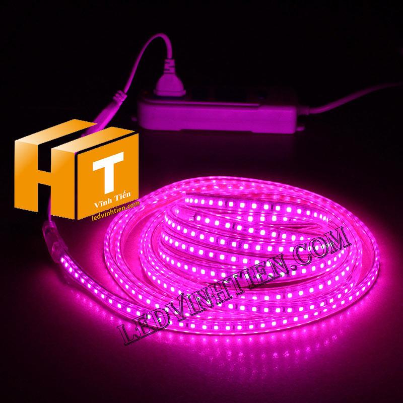 ledvinhtien.com hình ảnh chụp mọi góc cạnh của đèn led dây 220V chíp led 5050 ánh sáng màu vàng loại tốt, giá rẻ, chất lượng, siêu sáng, dùng chiếu sáng ngoài trời, hắt trần, quấn cây, trang trí nội thất, ngoại thất, chiếu sáng công viên, xem thêm màu hồng